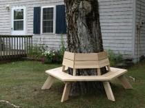 cedar tree bench